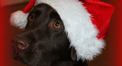 Kerst bij Hond Centraal